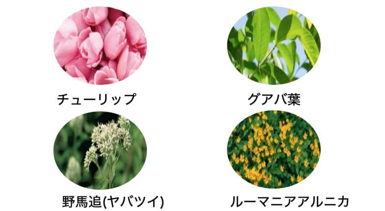 HSPを増やす植物